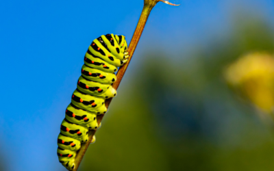224 words – lessons from The Very Hungry Caterpillar